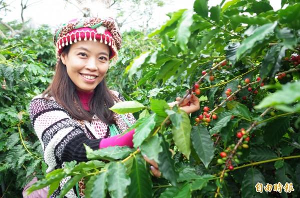 陳韻庭種出金牌咖啡,最近得獎後訂單接不完,忙著做採收及加工,她以最新的無氧發酵處理,讓咖啡風味更上一層樓。(記者花孟璟攝)